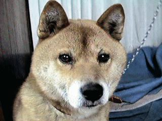 生きてた頃の二郎さんの写真。